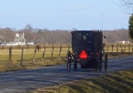 Amish Whooping Cough
