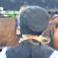 Amish Woman Topics