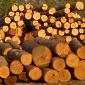amish wood