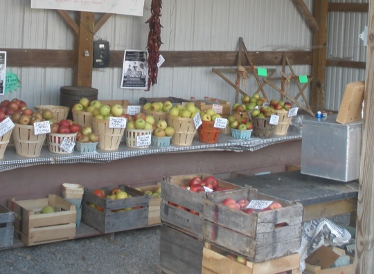 apples-at-stand
