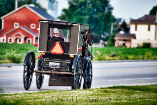 arment-photo-amish-woman-buggy