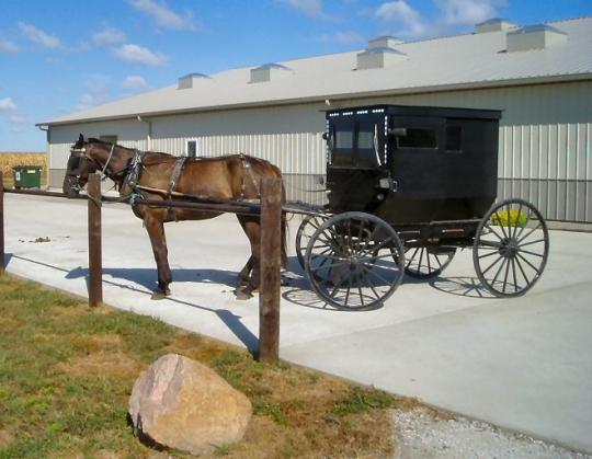 arthur amish buggy