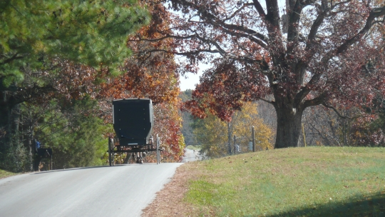 autumn amish buggy