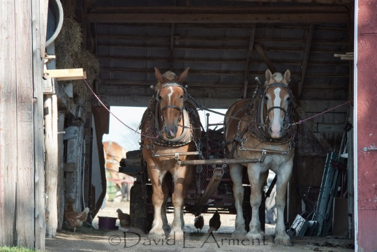barn-horses-arment-photography