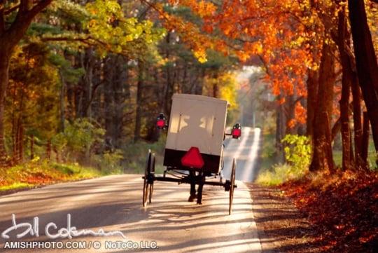 Bill Coleman Amish Buggy Autumn