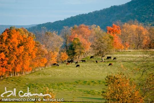 Bill Coleman Autumn Field