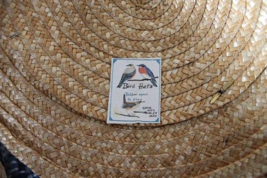 bird-hat