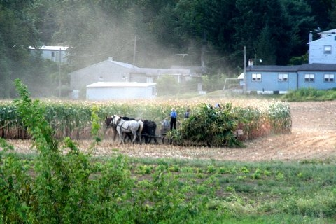 boy-amish-harvest