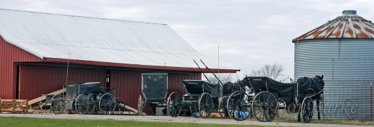 buggy-lineup-amish-missouri