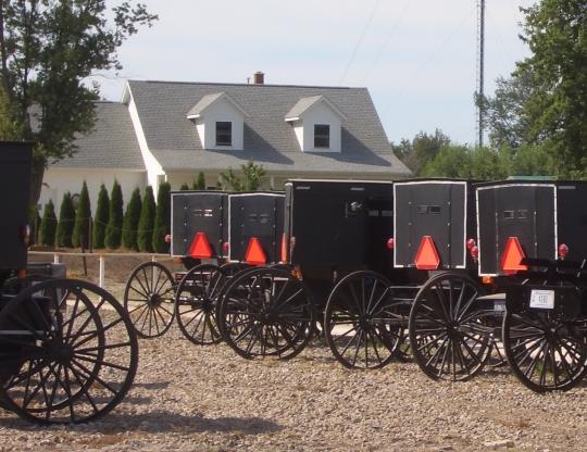 buggy rows amish indiana