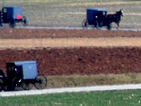 Gray Buggies in Lancaster County