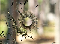 bullet-hole-in-window