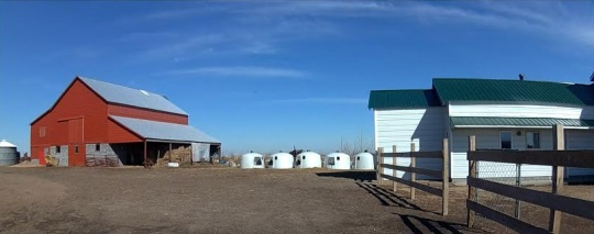 calf-hutches-south-dakota