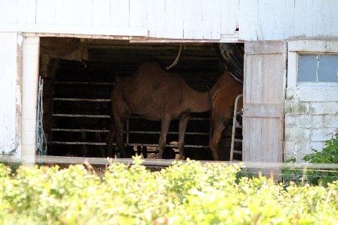 Camel Barn Lancaster County