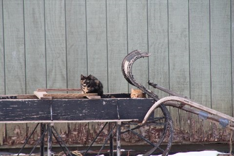 cat-perched-on-sleigh