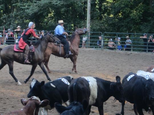 Cattle Pen Lancaster Rodeo