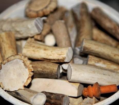 Deer Antler Pieces