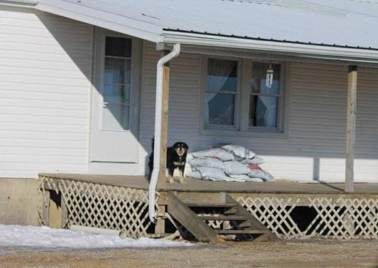 dog-on-porch