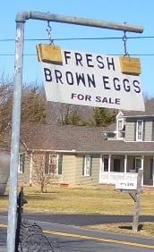 dover amish eggs