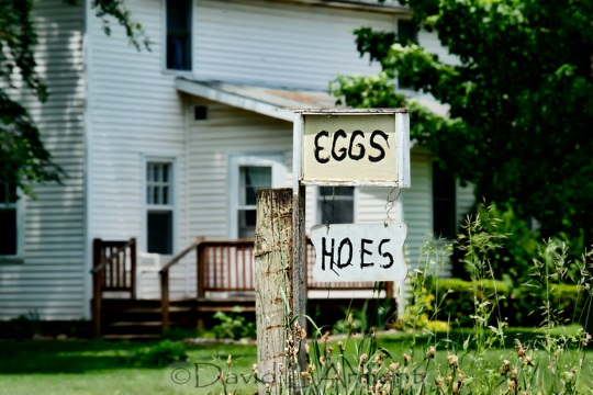 eggs-and-hoes