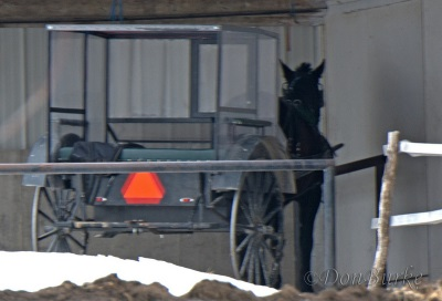 enclosed-windscreen-buggy-amish