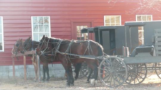 ethridge amish buggy hitch