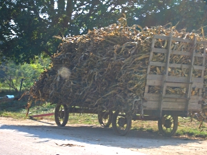 KY legislators to the rescue of Swartzentruber Amish?