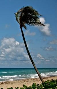 florida amish palm