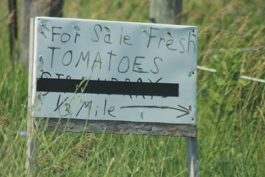 for-sale-fresh-tomatoes