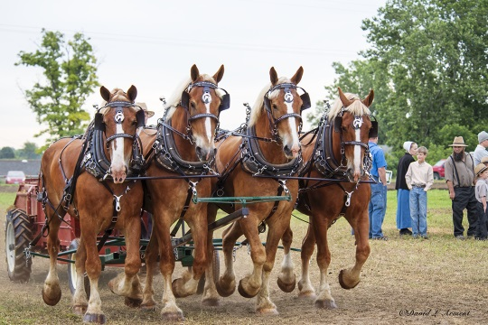 four-horse-team-indiana-amish-event