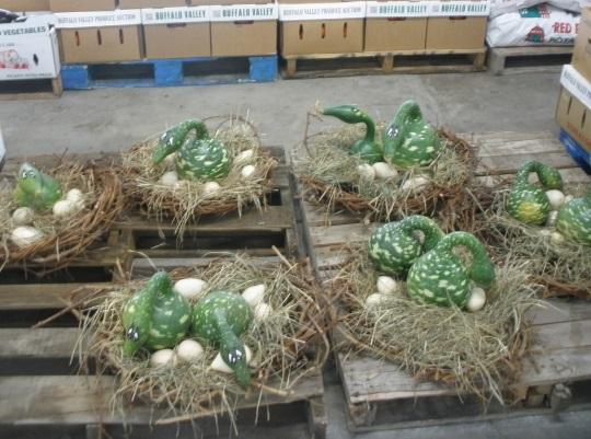gourd-ducks