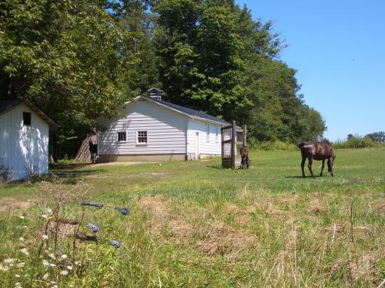 grazing horses amish school