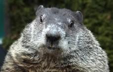Groundhog Day PA Dutch