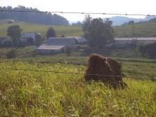 Holmes Amish Oldest