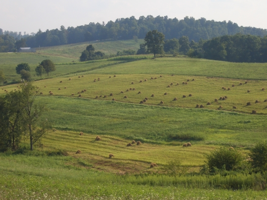 holmes county amish fields