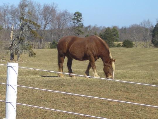 horse-halifax-county-va