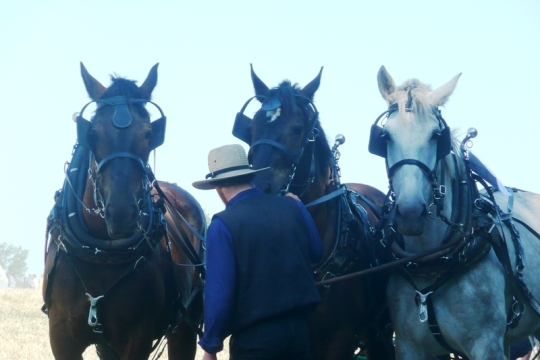 Horse Progress Days Three Horses