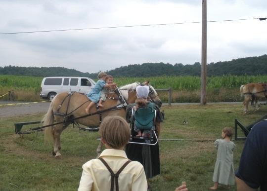 horse-rides-pennsylvania-auction