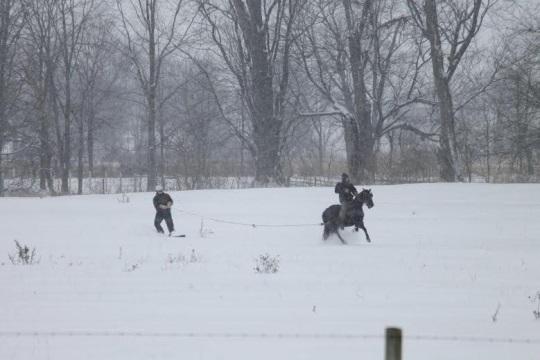 Horse Snowboarder