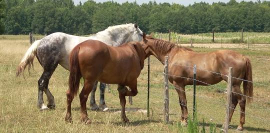 Horses Ethridge TN