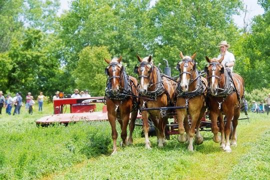 horses-four-hay-demo