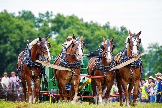 horses-four