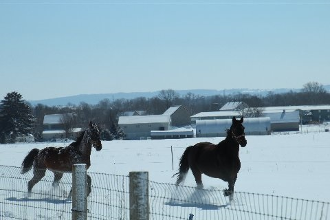 horses-frolicking-in-snow