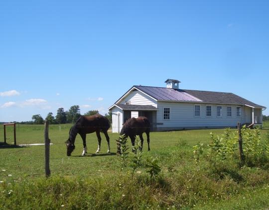 horses grazing amish ohio