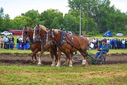 horses-three-plowing-demo
