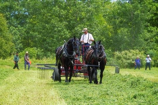 horses-two-dark-hay-demo
