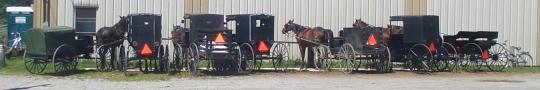 hot amish horses