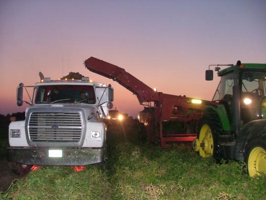 hutterite farm work