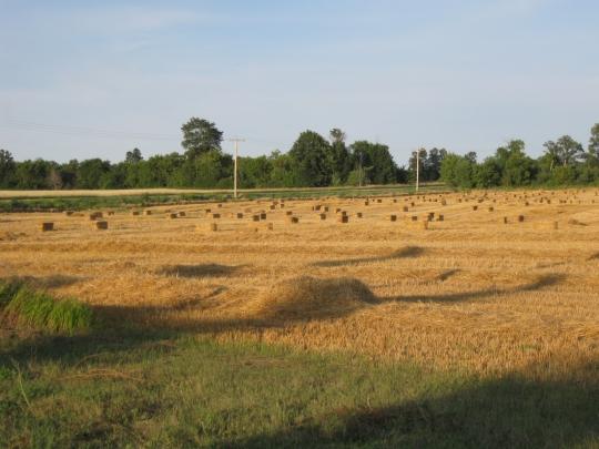 hutterite fields