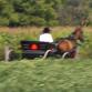 Illinois Amish Beds
